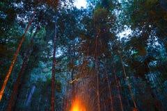 Lägereldglöd som stiger i skog Arkivfoton