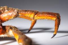 Lägga benen på ryggen, klösa, den europeiska spindelkrabban, hårigt som är orange, skugga, makro, c Arkivbild
