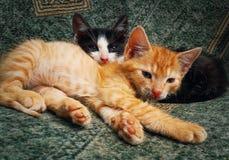 Lägga för två kattungar arkivfoto