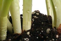 lägga in för växter Arkivfoto
