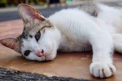 Lägga katten Royaltyfri Bild