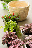 Lägga in växter arkivfoton