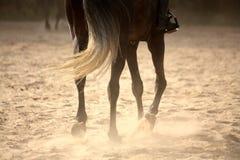 Lägger benen på ryggen den bort hästen för trava tätt upp Royaltyfria Bilder