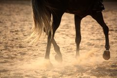 Lägger benen på ryggen den bort hästen för trava tätt upp Royaltyfri Foto