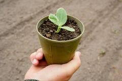 lägger in plantor arkivfoto