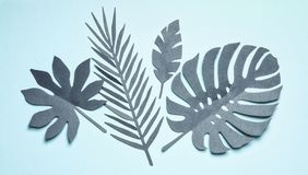 Lägger tropiska sidor för turkos som komponerar på pastellfärgad blå bakgrund, bästa sikt, framlänges Idérik botanisk orientering arkivfoto