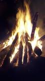 Lägret avfyrar i skog Royaltyfria Bilder
