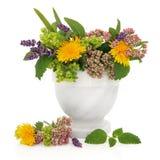 Läka örtar och blommor arkivfoto