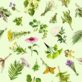 Läka växter med den sömlösa modellen Arkivfoton