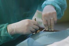 Läkare som arbetar på bårhus 014 Arkivbild