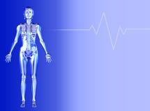 läkarundersökning för kvinnligt diagram för bakgrund blå Arkivfoton