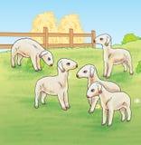 Lämmer auf dem Bauernhof Stockbilder