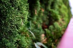 Lämna bakgrund i trädgården fotografering för bildbyråer