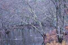Lämna mindre träd uppvisning ändrande säsonger royaltyfri foto