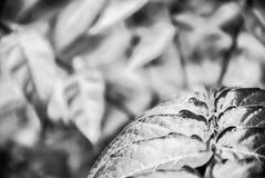 Lämnar av en växt Arkivfoton