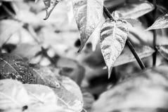 Lämnar av en växt Arkivbilder