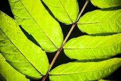 Lämnar av en växt Arkivfoto