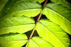 Lämnar av en växt Royaltyfri Fotografi