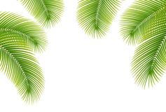 Lämnar av palmträd på vitbakgrund. Arkivfoto