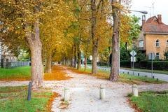 Lämnar den färgrika gränden för hösten lövverkträd gatan, Maribor Slove Arkivfoton