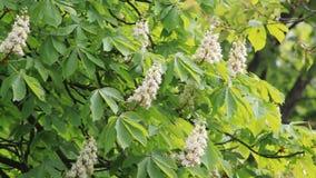 Lämnar den gröna naturen för kastanjebrun gunga stammar för bakgrundssolväxten, sommarvår somvind lämnar busken arkivfilmer