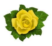 Den gula rosa blomman med lämnar vektor illustrationer