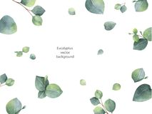 Lämnar det blom- banret för vattenfärgvektorgräsplan med silverdollareukalyptuns och filialer som isoleras på vit bakgrund Royaltyfri Fotografi