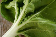 Lämnar grönsaken Fotografering för Bildbyråer