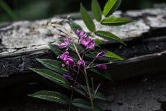 Lämnar och blomman Royaltyfri Bild