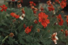 lämnar orange färggräsplan för blommor närbild Royaltyfria Bilder