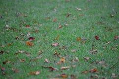 Lämnar på gräset Royaltyfri Bild