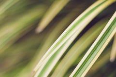 Lämnar slut för gulaktig gräsplan upp bakgrund arkivbild