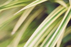 Lämnar upp slut för gulaktig gräsplan arkivfoto