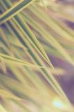 Lämnar upp slut för gulaktig gräsplan arkivbilder