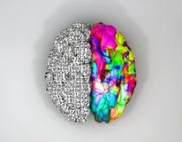 Lämnat och högert bästa hjärnbegrepp Arkivfoto