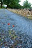 Ländlich südlich Frankreich-Morgens, Weg zu den Rebyards Stockbilder