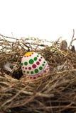 Ländliche Eier eins in einem Nest Stockbilder