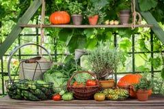 Ländliche Ernte im Garten am sonnigen Tag stockfotografie