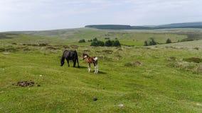 Ländliche Frühlingsszene auf Dartmoor Süd- West-England Lizenzfreies Stockfoto