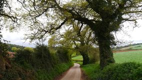 Ländliche Frühlingsszene in der Landschaft von Devon South West England Stockbild
