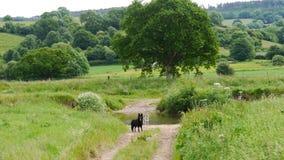 Ländliche Frühlingsszene in der Landschaft von Devon South West England Lizenzfreies Stockfoto