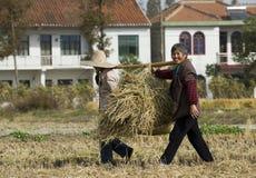 Ländliche Frauen, die Weizenstroh ernten Lizenzfreie Stockfotos
