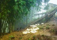 Ländliche Geflügelfarm (Ente und Huhn) auf Dorf des grünen Hügels Stockfotos
