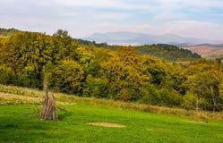 Ländliche grasartige Felder auf Karpatenhügeln Lizenzfreies Stockfoto