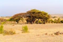 Ländliche Landschaft in Äthiopien Stockfotografie