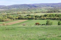 Ländliche Landschaft lizenzfreies stockbild