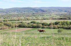 Ländliche Landschaft stockfoto