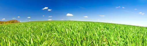 Ländliche Landschaft des Frühlinges mit Feld und blauem Himmel, ein Panorama Lizenzfreie Stockfotos