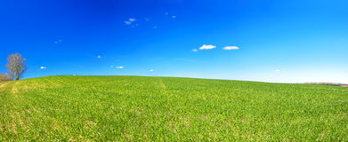 Ländliche Landschaft des Frühlinges mit Feld und blauem Himmel, ein Panorama Stockfoto