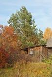 Ländliche Landschaft des Herbstes: kleines Haus unter einer Kiefer Stockfotografie